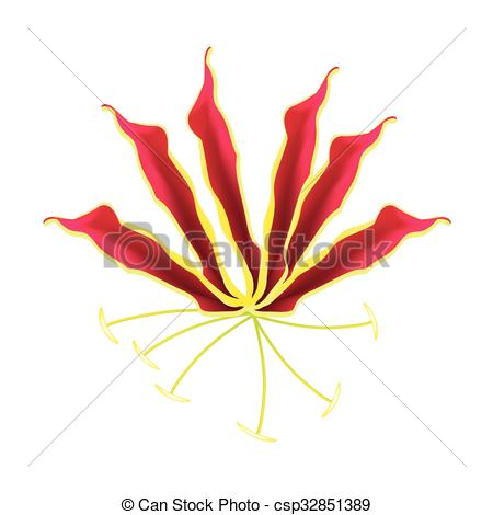 Vector of Flame Lily or Gloriosa Superba Flower on White.