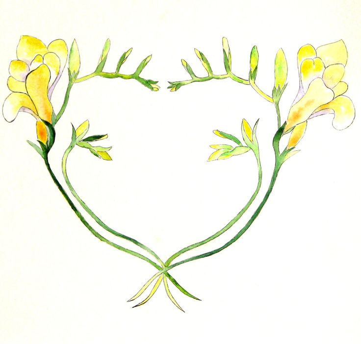 1000+ ideas about Freesia Flowers on Pinterest.