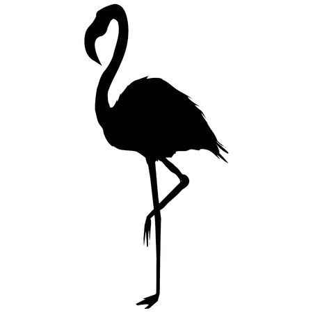 1,066 Black White Flamingo Stock Illustrations, Cliparts And Royalty.