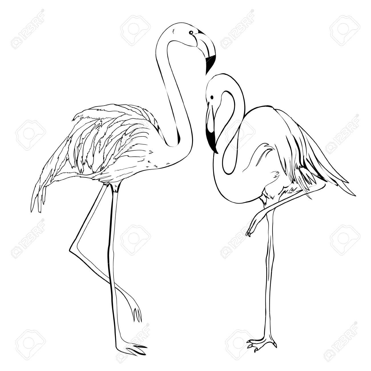 Flamingo vector illustration. Doodle style. Isolated on white...