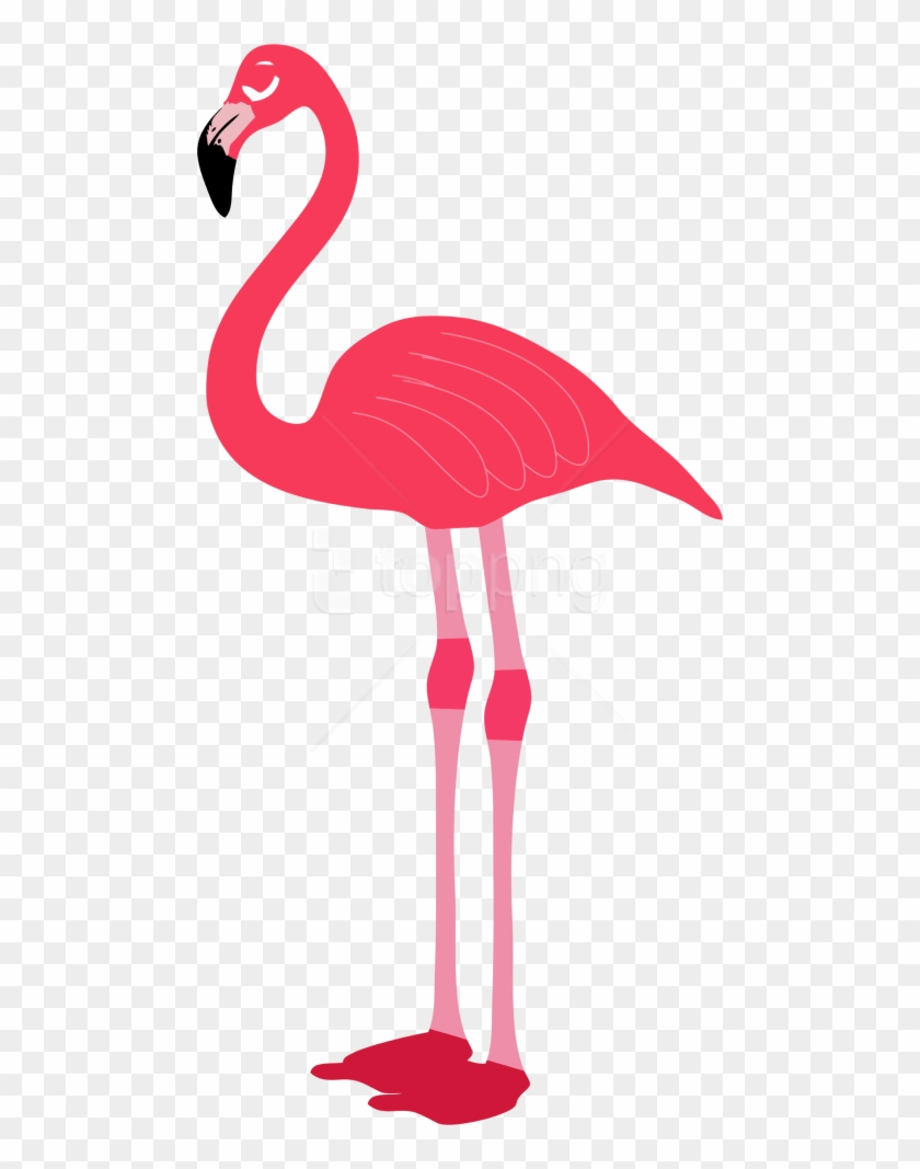 Download Flamingo Png Images Background.