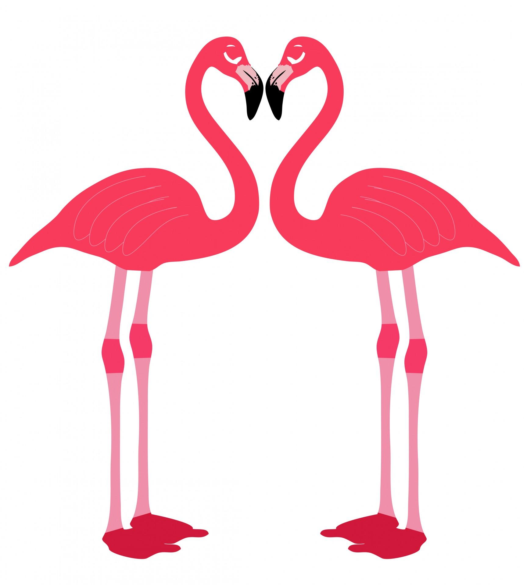 Flamingo Birds Love Heart Free Stock Photo.