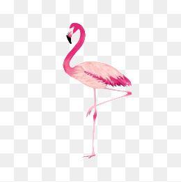 Proud Flamingo Transparent Background Basemap in 2019.