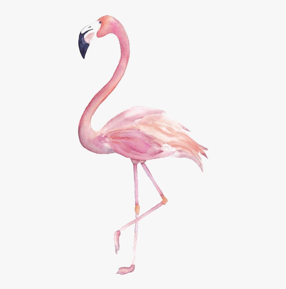 Flamingo Clipart Png.