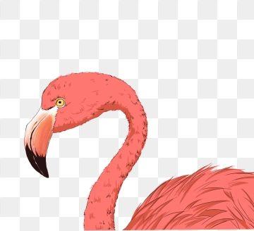 2019 的 Beautiful And Colorful Flamingo Decorative Elements.