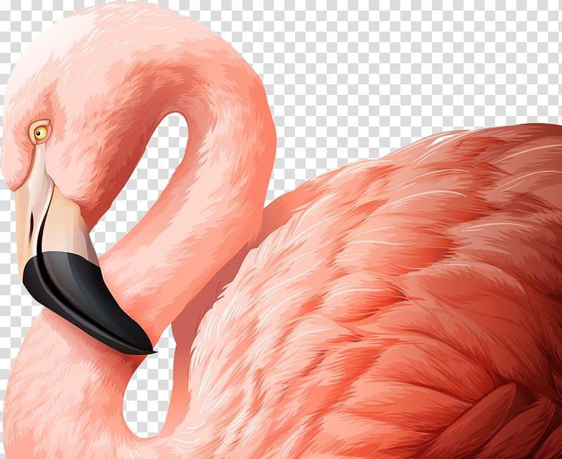 Flamingo Bird Illustration, Pink Swan FIG. transparent.