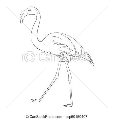 Hand drawn flamingo black outline sketch. Vector illustration.