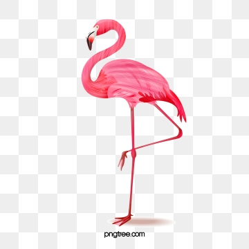 Flamingo PNG Images.
