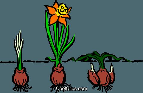 Cartoon Pflanzen Vektor Clipart Bild.