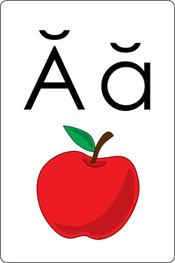 Alphabet Flash Cards.