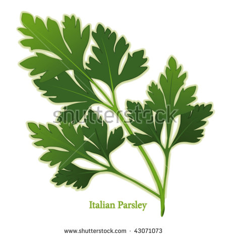 Vector Images, Illustrations and Cliparts: Parsley, Italian Flat.