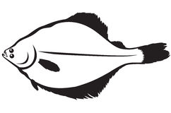 Flatfish Stock Illustrations.