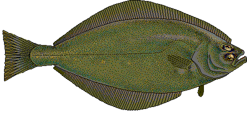 Flatfish Clip Art Download.