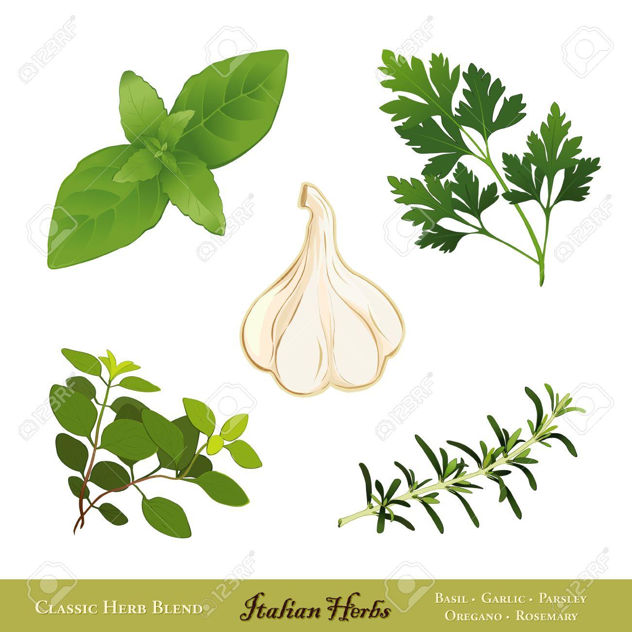Traditional Italian Herbs Sweet Basil, Garlic, Flat Leaf Parsley.