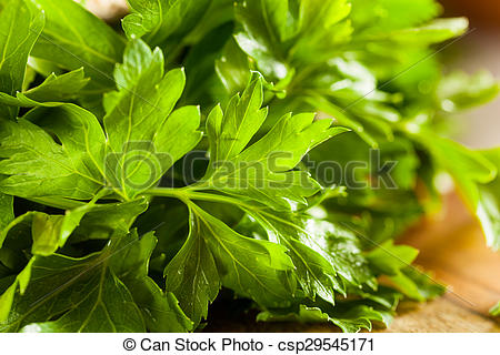 Picture of Organic Italian Flat Leaf Parsley Ready to Eat.