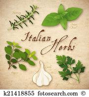 Flat leaf parsley Illustrations and Clip Art. 9 flat leaf parsley.