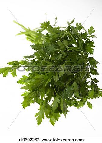Stock Photo of Flat Leaf Parsley u10692262.
