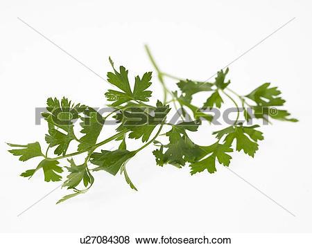 Pictures of Flat Leaf Parsley u27084308.