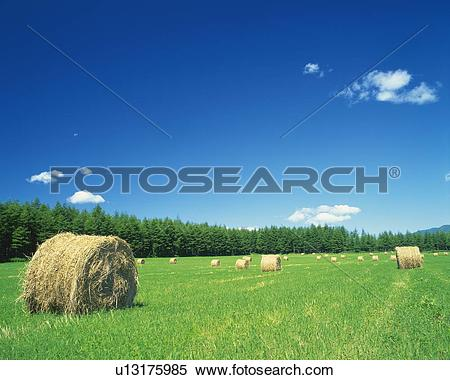 Stock Image of a Flat Land of Grass, With Several Bales of Hay.