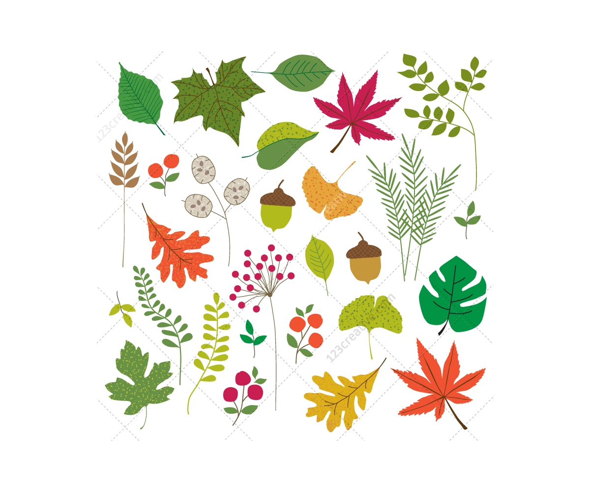 Flat trees and leaves vector pack contains various tree vectors.