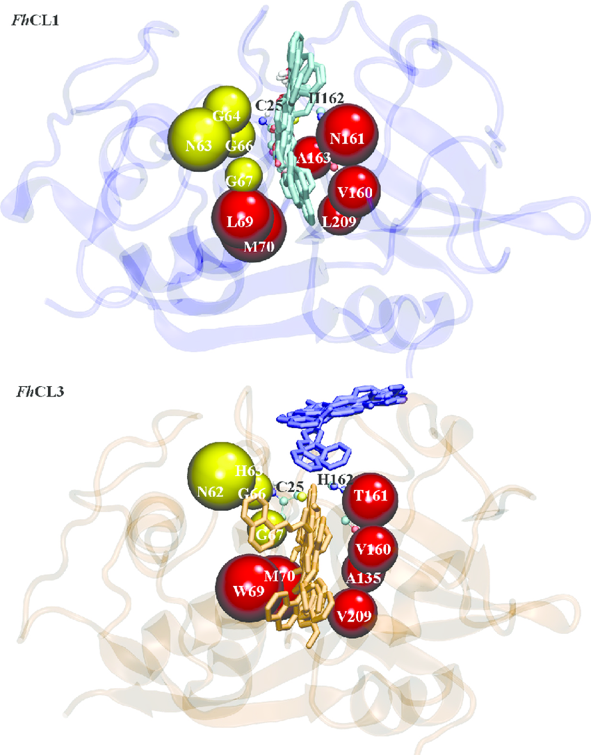 Fig 3. Flavonoids binding sites predicted by molecular docking.