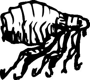 Flea clip art Free Vector / 4Vector.