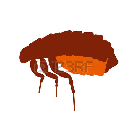 269 Flea Bite Stock Illustrations, Cliparts And Royalty Free Flea.