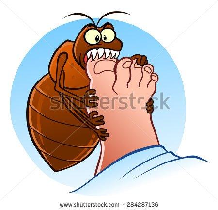 Showing post & media for Human flea cartoon.