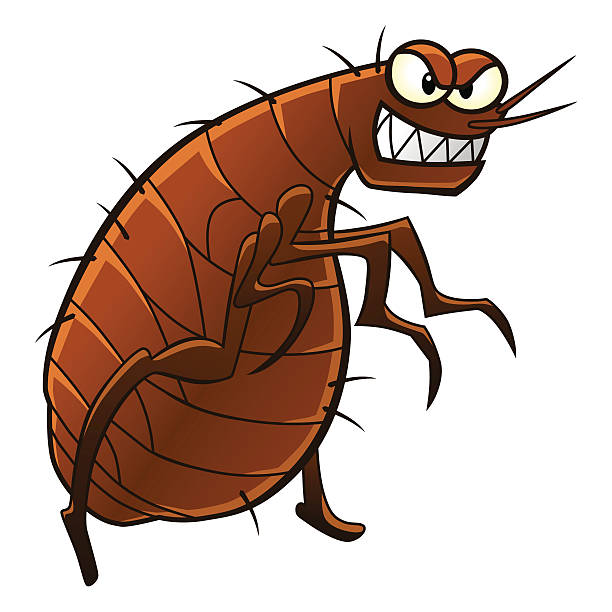 Best Fleas Illustrations, Royalty.