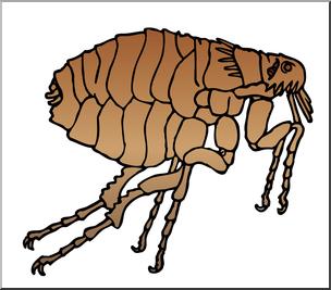 Clip Art: Insects: Flea Color I abcteach.com.