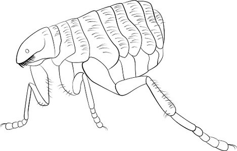 Black and white vector image of flea Clipart Image.