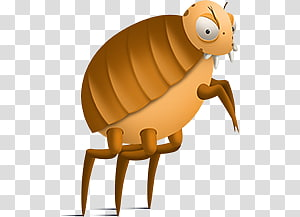 Fleas PNG clipart images free download.