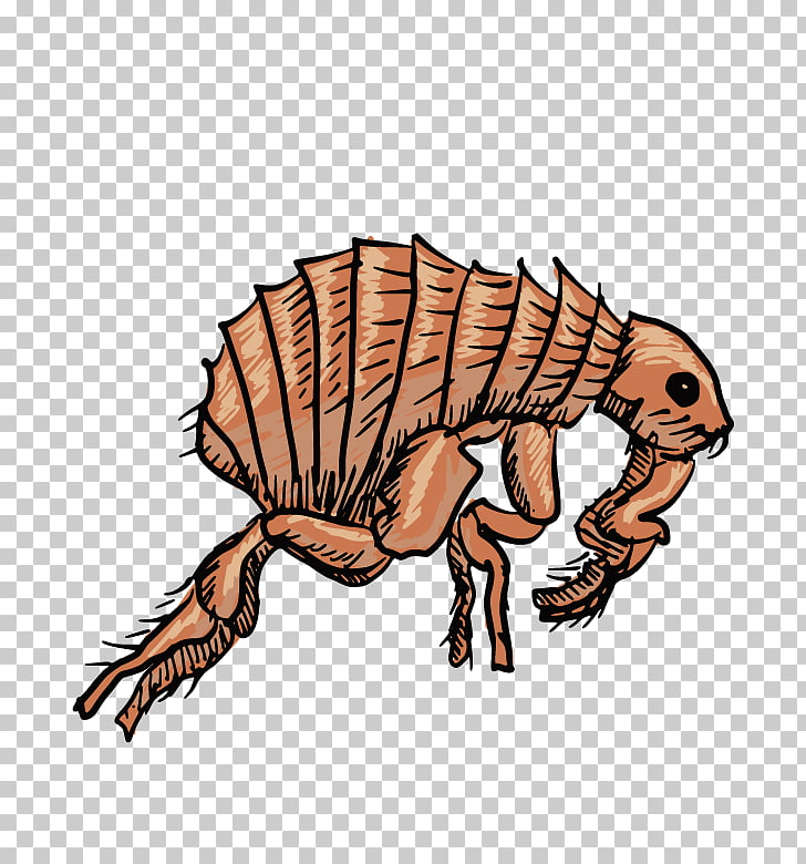 Black Death Insect Flea , insect PNG clipart.