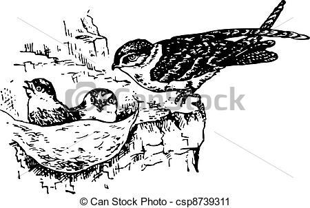Fledgling Stock Illustrations. 200 Fledgling clip art images and.