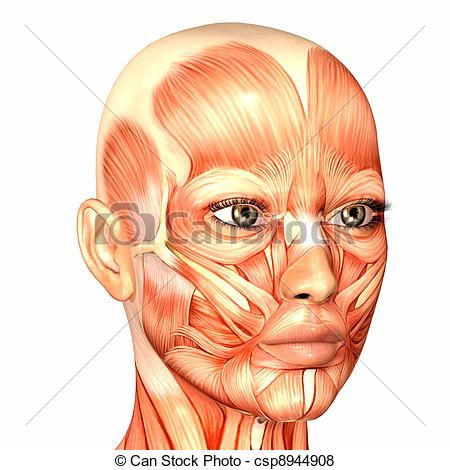 Flesh face Stock Illustrations. 355 Flesh face clip art images and.