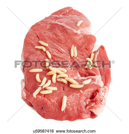 Pictures of Maggots on meat u59587418.