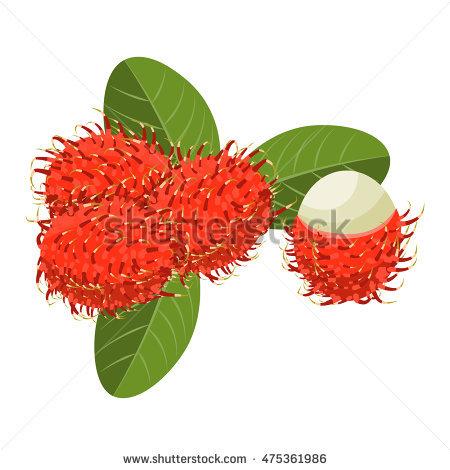 Rambutan Tree Stock Photos, Royalty.