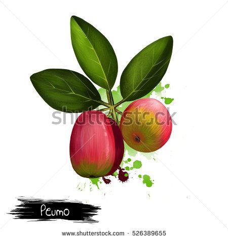 """""""fleshy Fruit"""" Stock Images, Royalty."""