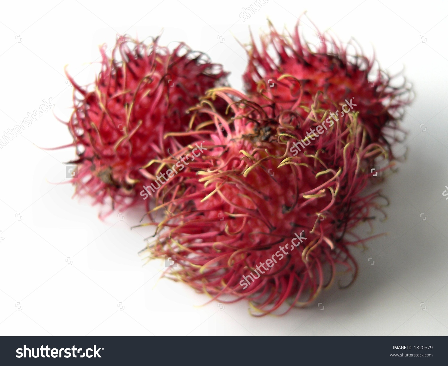 Three Red, Rambutan Fruits On White Background. The Rambutan Is.