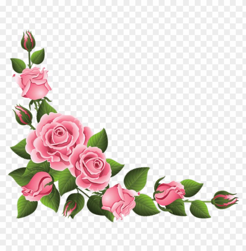 rose fleur PNG image with transparent background.