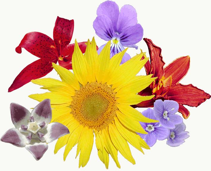 File:Bouquet fleurs.png.