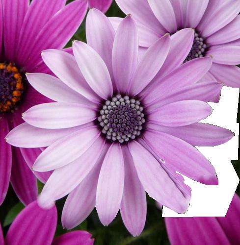 tube fleurs.