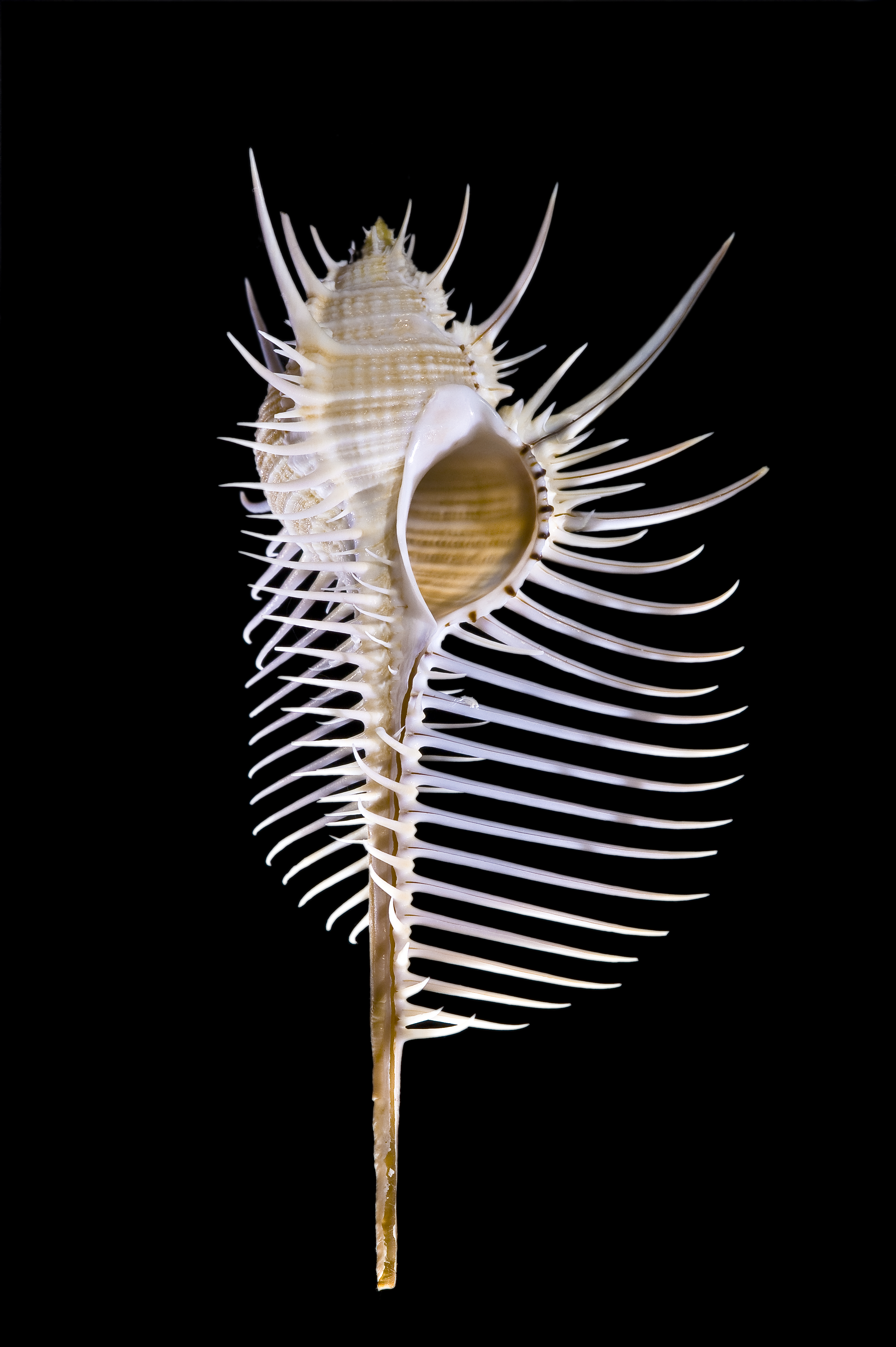 Commons:Featured pictures/Animals/Bones, shells and fossils.