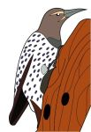 Northern Flicker Clipart by scythe80 on DeviantArt.
