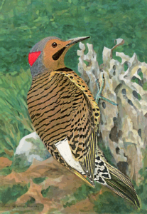 Flicker Male Clip Art Download.