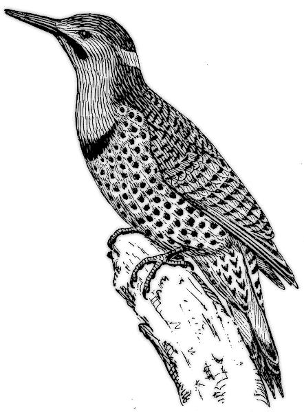 Flicker Clip Art Download.