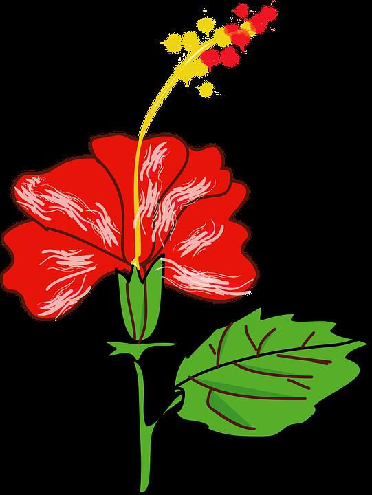 Edible, Flowers.