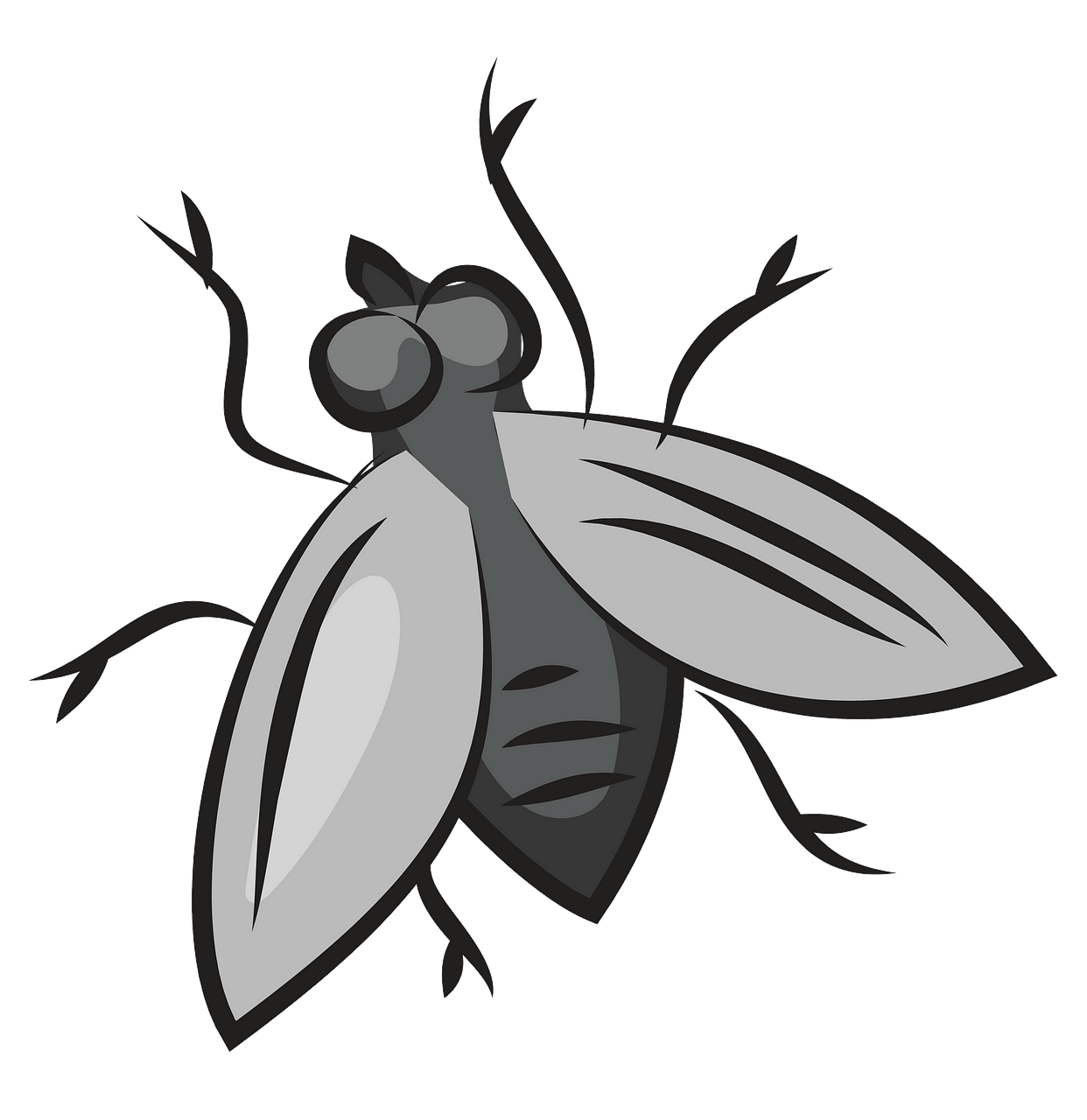 Fly clipart. Free download..