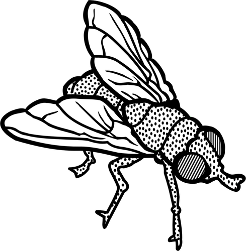 768 fly clipart image.