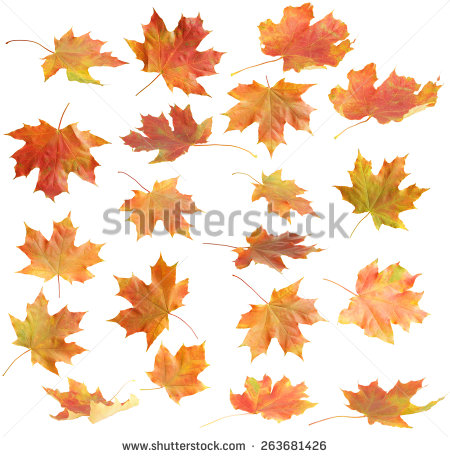 Maple leaf texture free stock photos download (4,035 Free stock.